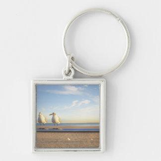 USA, New York City, Coney Island, three seagulls Key Ring