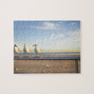 USA, New York City, Coney Island, three seagulls Puzzle