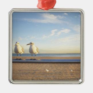 USA, New York City, Coney Island, three seagulls Silver-Colored Square Decoration