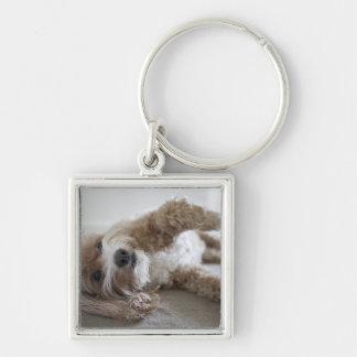 USA, New York, New York City, Brooklyn, Cockapoo Silver-Colored Square Key Ring