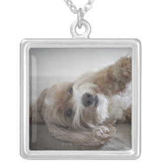 USA, New York, New York City, Brooklyn, Cockapoo Silver Plated Necklace