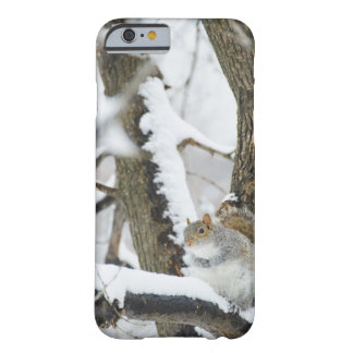 USA, New York, New York City, squirrel sitting Barely There iPhone 6 Case