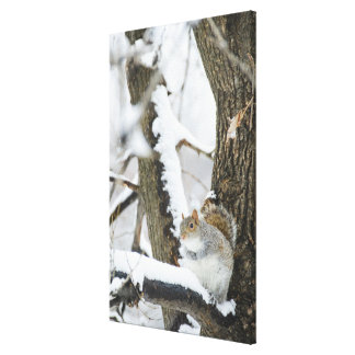 USA, New York, New York City, squirrel sitting Canvas Print