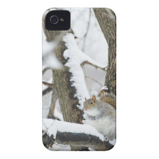 USA, New York, New York City, squirrel sitting iPhone 4 Case