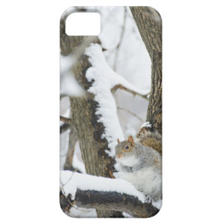 USA, New York, New York City, squirrel sitting iPhone 5 Case