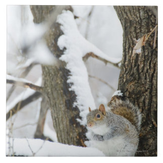 USA, New York, New York City, squirrel sitting Tile