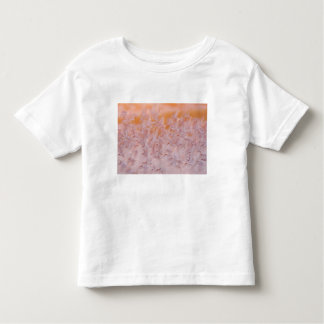 USA, New York, Nickerson Beach, Point Lookout. Toddler T-Shirt
