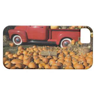 USA, New York, Peconic, pumpkin farm with pickup iPhone 5 Case