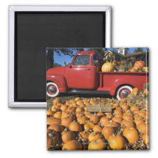 USA, New York, Peconic, pumpkin farm with pickup Magnet