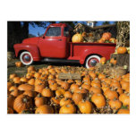 USA, New York, Peconic, pumpkin farm with pickup Postcard