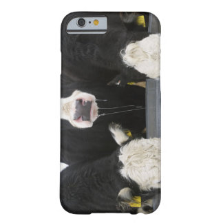 USA, New York State, Cows drinking from frozen Barely There iPhone 6 Case