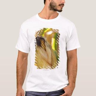 USA, New York State, Hudson, Corn cob growing in T-Shirt