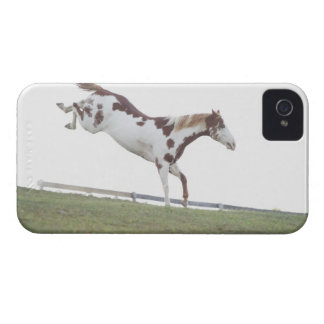 USA, New York State, Hudson, Horse jumping in Case-Mate iPhone 4 Cases