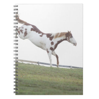 USA, New York State, Hudson, Horse jumping in Notebook