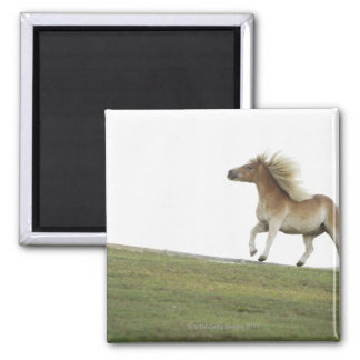 USA, New York State, Hudson, Horse running in 2 Square Magnet