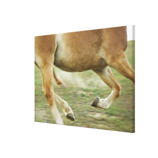 USA, New York State, Hudson, Horse running in Canvas Print