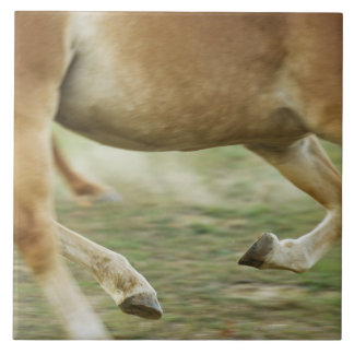 USA, New York State, Hudson, Horse running in Tile