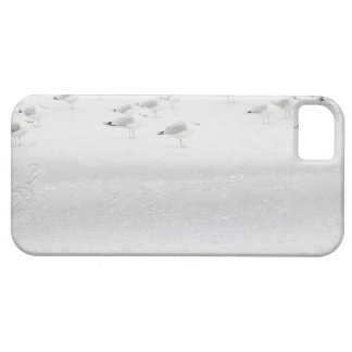USA, New York State, Rockaway Beach, seagull on Barely There iPhone 5 Case