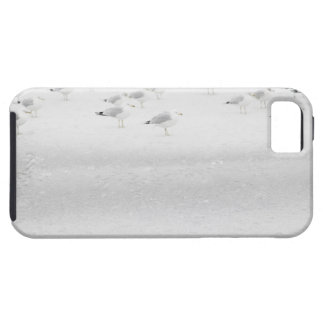 USA, New York State, Rockaway Beach, seagull on iPhone 5 Covers