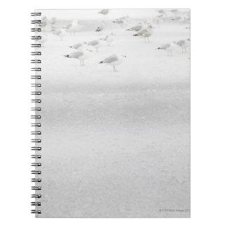 USA, New York State, Rockaway Beach, seagull on Notebook