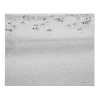 USA, New York State, Rockaway Beach, seagull on Posters