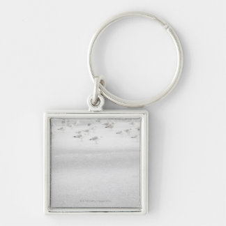 USA, New York State, Rockaway Beach, seagull on Silver-Colored Square Key Ring