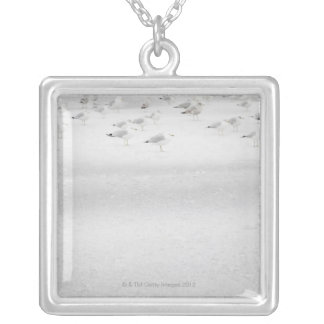 USA, New York State, Rockaway Beach, seagull on Silver Plated Necklace