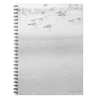 USA, New York State, Rockaway Beach, seagull on Spiral Notebook
