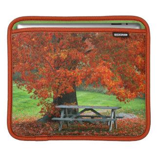 USA, New York, West Park. Bench Under Maple iPad Sleeve