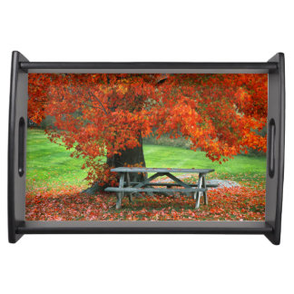 USA, New York, West Park. Bench Under Maple Serving Tray