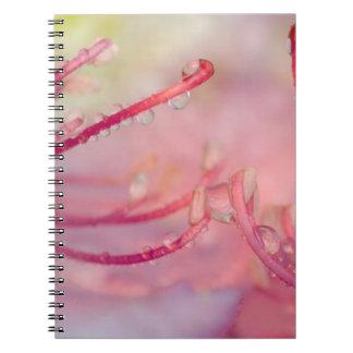 USA, North Carolina. Catawba rhododendron with Notebook