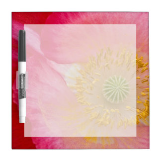 USA, North Carolina. Close-up of poppy interior Dry-Erase Board