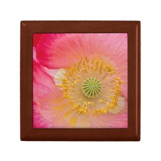 USA, North Carolina. Close-up of poppy interior Small Square Gift Box