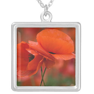 USA, North Carolina. Close-up of poppy Silver Plated Necklace