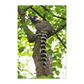 USA, North Carolina, Duke Lemur Center Canvas Print