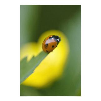 USA, North Carolina, Ladybug on tip of leaf. Photo Print