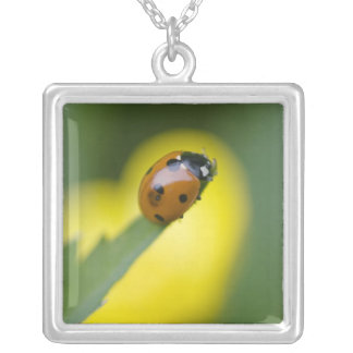 USA, North Carolina, Ladybug on tip of leaf. Silver Plated Necklace