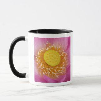USA; North Carolina; Lotus blooming in the Mug
