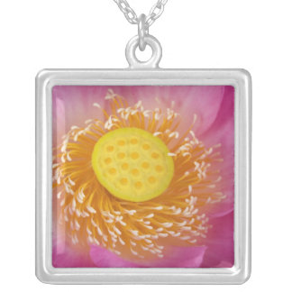 USA; North Carolina; Lotus blooming in the Silver Plated Necklace