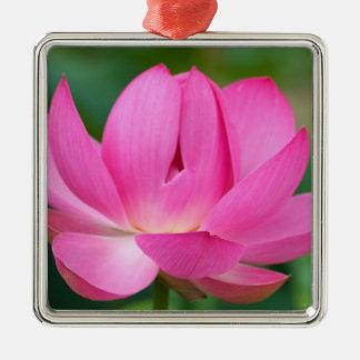 USA; North Carolina; Lotus blossom Christmas Ornament