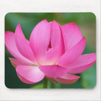 USA; North Carolina; Lotus blossom Mouse Pad