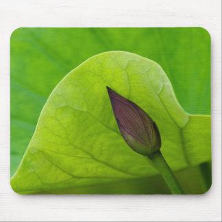 USA; North Carolina; Lotus leaf and bud Mouse Pad
