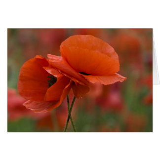 USA, North Carolina. Two red poppies Card