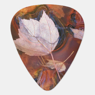 USA, Northeast, Fall leaves in puddle with Guitar Pick