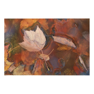 USA, Northeast, Fall leaves in puddle with Wood Print