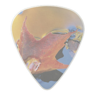 USA, Northeast, Maple Leaf in Reflection Acetal Guitar Pick