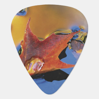 USA, Northeast, Maple Leaf in Reflection Guitar Pick