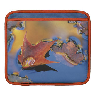 USA, Northeast, Maple Leaf in Reflection iPad Sleeve