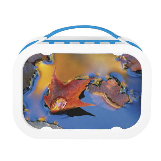 USA, Northeast, Maple Leaf in Reflection Lunch Box
