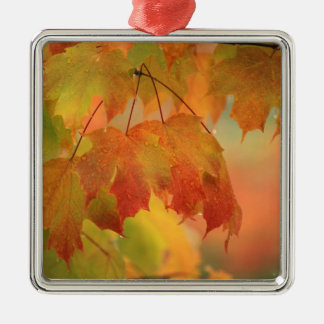 USA, Northeast, Maple Leaves in Rain. Credit as: Christmas Ornament